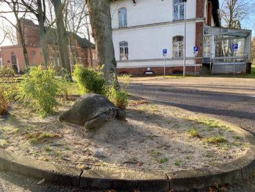 Klaus Kütemeier: Schildkröte (Foto: Hilke Oberländer, 2020)